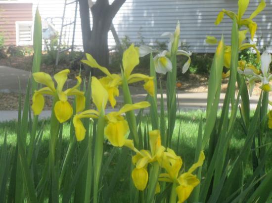 Flowers. Shadelands Ranch Museum, Iganacio Valley Road, Walnut Creek, Ca