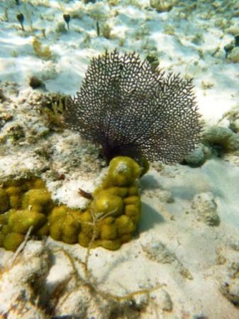 Guardalavaca Beach: Under the sea Xx