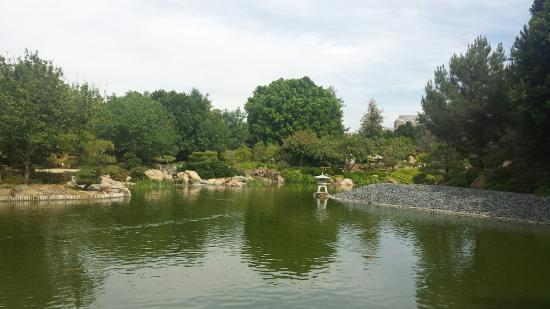 Japanese Friendship Garden: Starving Koi fish, beautiful garden