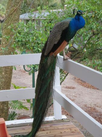 Sportsman's Lodge Motel & Marina: Friendly visitor!