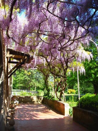 Colonzelle, França: terrasse1