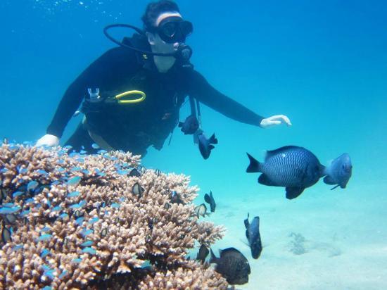 Amigos Divers Nha Trang: diving!