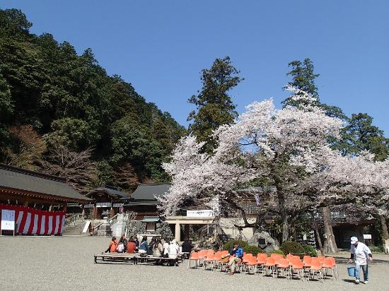Koma Shrine: 2014年春 桜