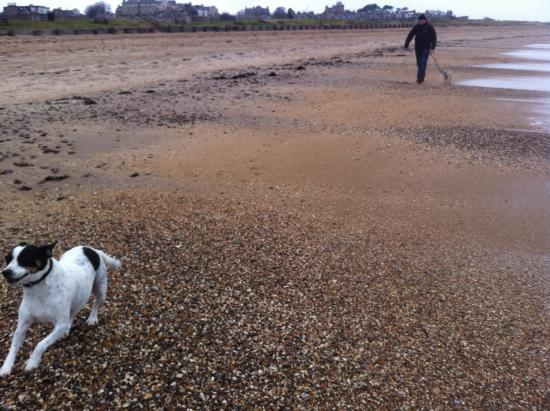 Richmond Cottage: Lovely pup running on North sea