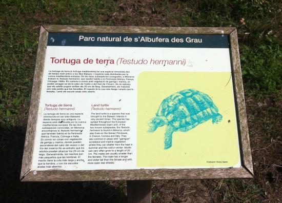 Parque Natural de Sa Albufera des Grau