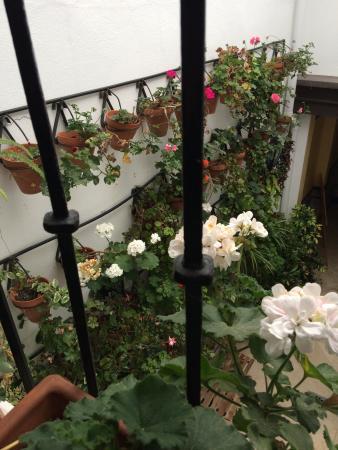 Casa de las Mercedes: Desde mi balcon