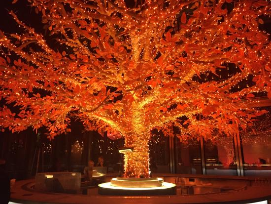 Tree on the terrace picture of sushisamba london for Terrace trees