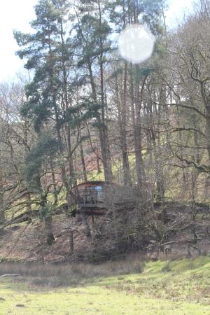 Lofty the treehouse picture of living room treehouses for 8 living room tree houses powys