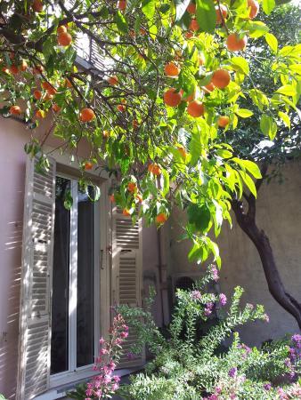 Nice Garden Hotel: The bitter orange tree in the garden