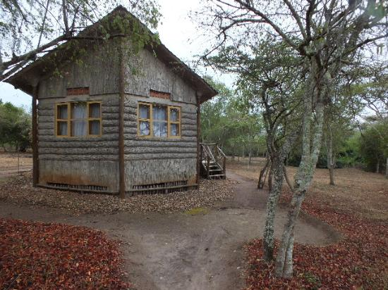 The log cabins in concrete picture of arcadia for Concrete log cabin
