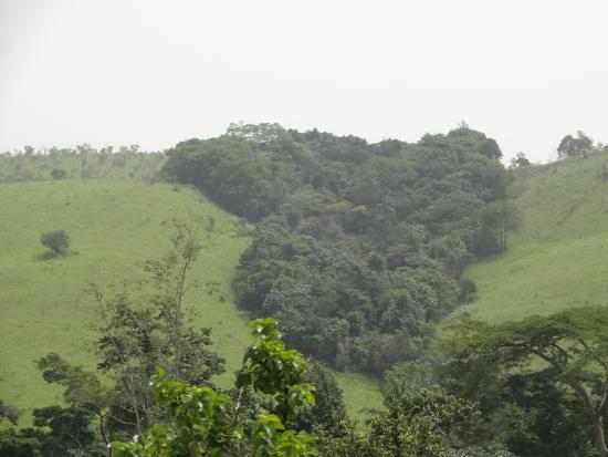Franceville, Gabon: Sur la route un ensemble d'arbres qui ont la forme du continent africain
