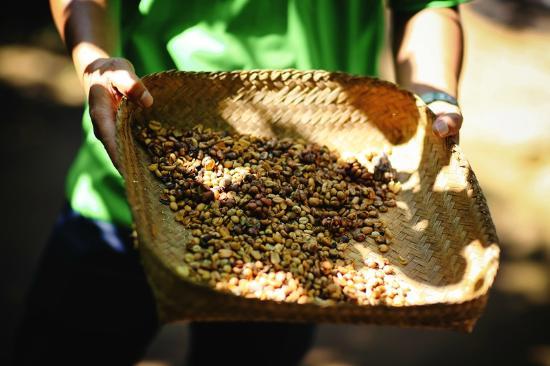 Civet coffee process - photo#21