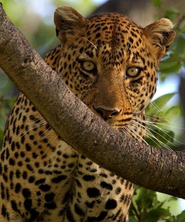 Eyes on Africa - Serengeti Day Tours