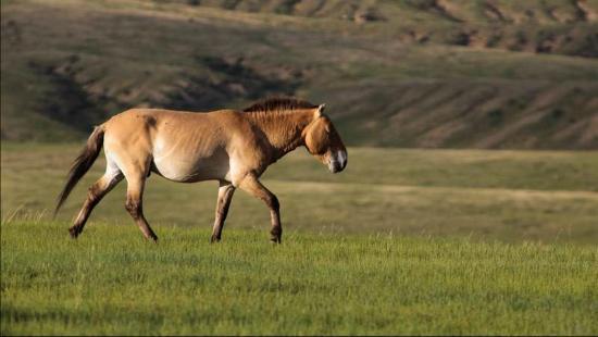 Lilon Travel Mongolia