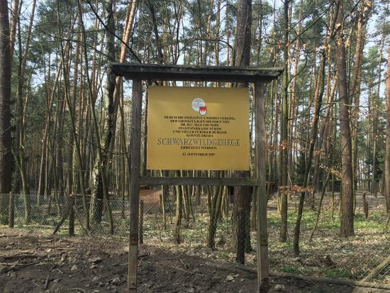 Wildschweingehege (Wild Pig Enclosure): Placa no local. Mas meu alemão...