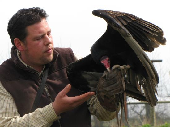 millets farm falconry centre james with turkey vulture