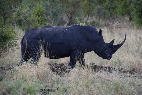 Meru National Park: Rhino