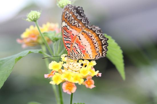 Love The Wings Fotograf A De Victoria Butterfly Gardens