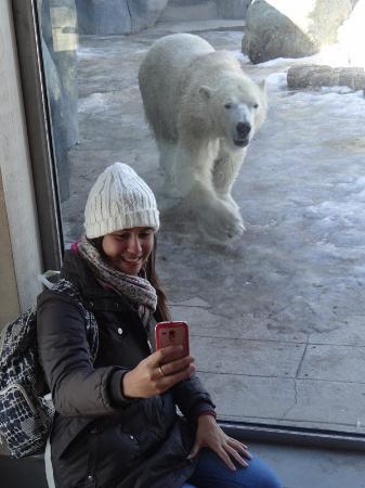 Toronto Zoo: Minha filha tentando fazer uma selfie com o urso polar