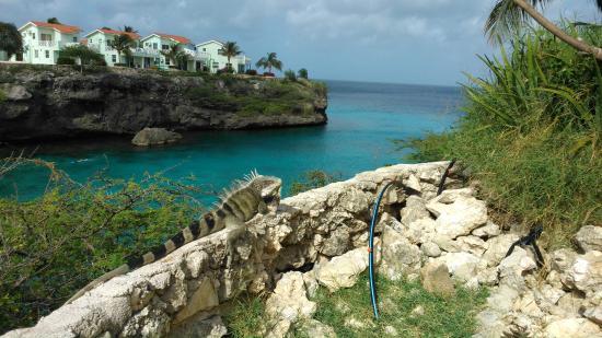 Lagoon Ocean Resort : Visitante frequente