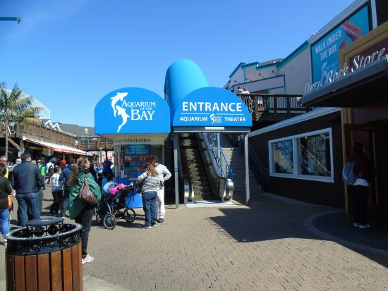 Bolha no aqu rio picture of aquarium of the bay san for Fish store san francisco