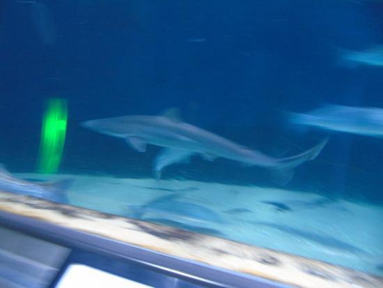 Interior Picture Of Aquarium Of The Bay San Francisco Tripadvisor