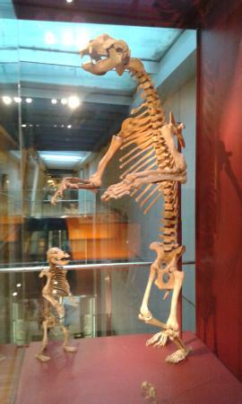CosmoCaixa Barcelona : Esqueletos