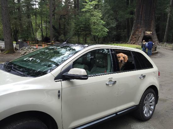 Holiday Inn Eugene - Springfield: Winston chauffeurs!