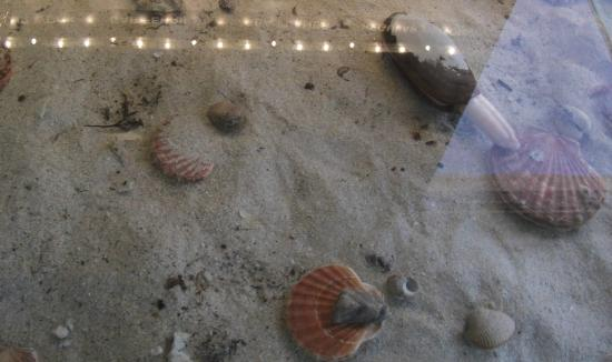 Tobermory Marine Exhibition: Variety