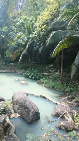 Phanom Bencha Mountain Resort: Почти джунгли