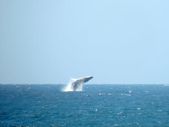 Casablanca : Salto de ballena