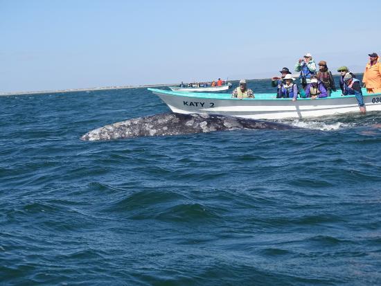 Baja Ecotours: Whales in Baja