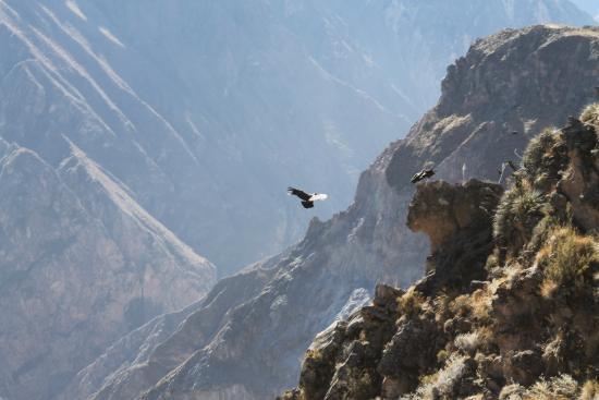 Colca Trek Day Tours