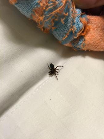 Howard Johnson Anaheim Hotel and Water Playground : Killed two spiders in our bed and three on floor :(