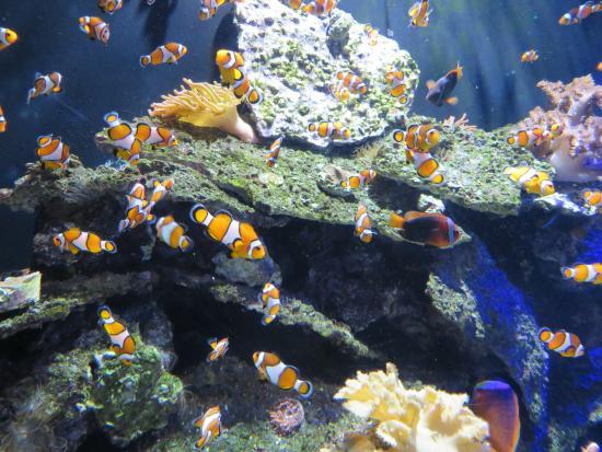 Clown Fish Picture Of Sea Life Kansas City Kansas City