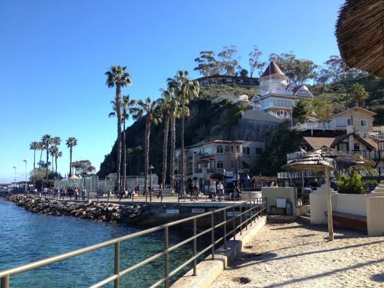 This Is Where The Boat Lands On Catalina Island Picture Of
