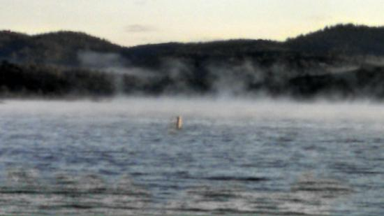 Collins Lake Recreation Area: View of the lake as the fog rolled in