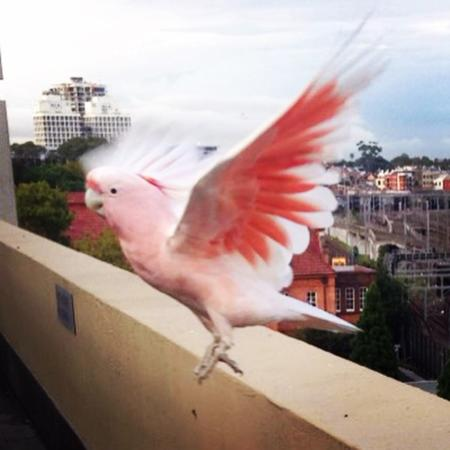 Bounce Sydney: Our breakfast buddy :)