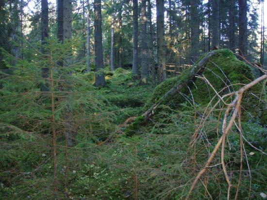 Gronudde naturreservat