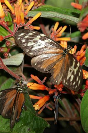 Green Hills Butterfly Ranch : beauty3