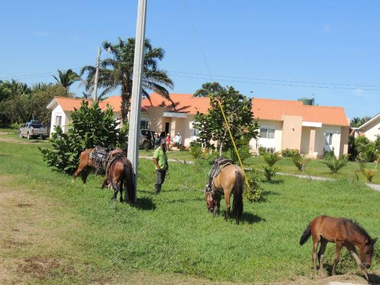 Trujillo Beach Eco Resort: Horseback riding
