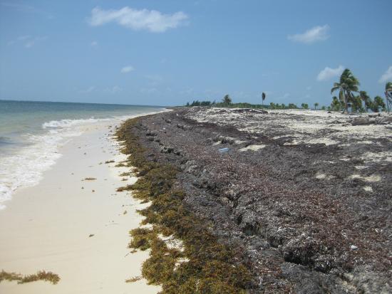 Beach Picture Of Royalton Riviera Cancun Resort Amp Spa