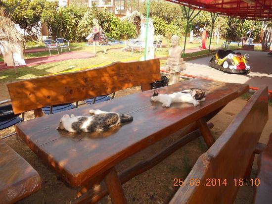 Kavros Beach: В деревне есть Фун парк там не только кошки но и собаки и кенгуру ,детишкам понравится ! Вход бе