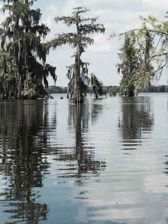 Lake Martin Rookery: This if what it is truly like to tour a swamp!