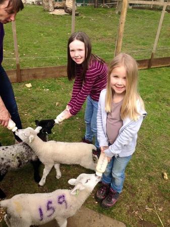 Feather Down Farms at Midgham Farm: Feeding Haribo, Kinder & Skittles!