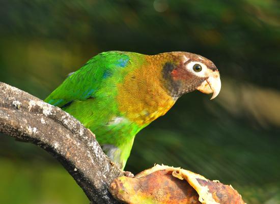 Pedacito de Cielo : Lots of Parrots
