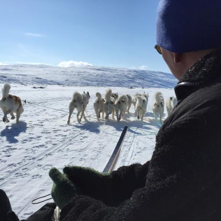 Hundeslæde på Kangerlussuaq fjord ��
