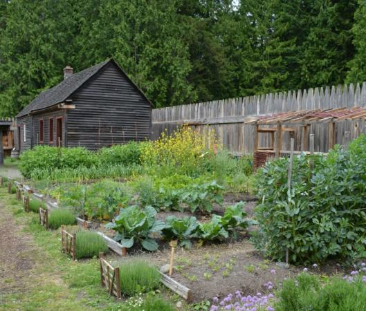 Fort Nisqually Living History Museum : One of the Heritage Gardens