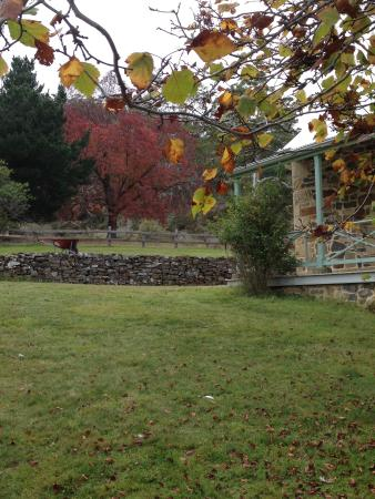 Buckland, Австралия: Autumn leaves at Brockley Estate