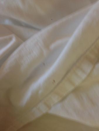 Baymont Inn & Suites Nashville/Brentwood: Bedsheet